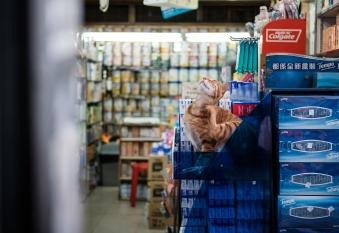 shop cat...